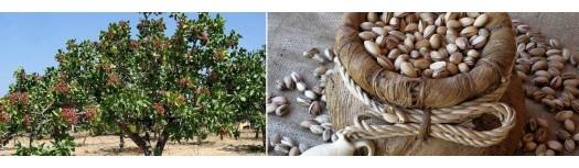 Macchine per la trasformazione di mandorle, pistacchi, noci